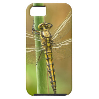 Dragonfly iPhone 5 Covers