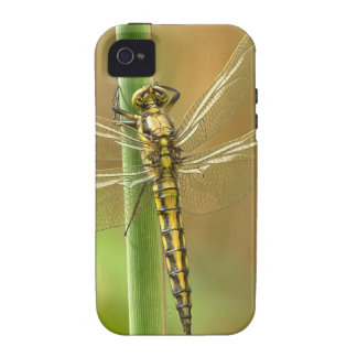 Dragonfly Vibe iPhone 4 Cover