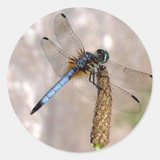 Dragonfly! Classic Round Sticker