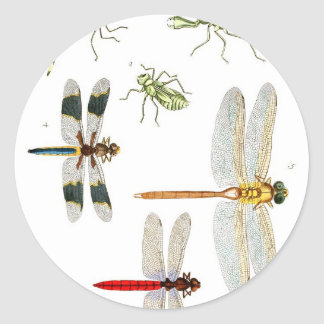 dragonfly-clip-art-4 classic round sticker