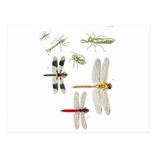 dragonfly-clip-art-4 postcard