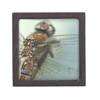 Dragonfly close-up gift box