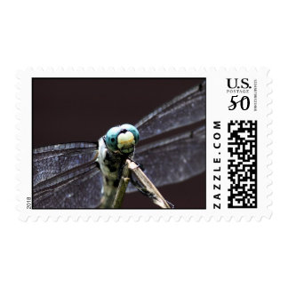 Dragonfly Close-up Stamp