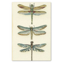 """Dragonfly Collection by Chariklia Zarris 10"""" X 15"""" Tissue Paper"""