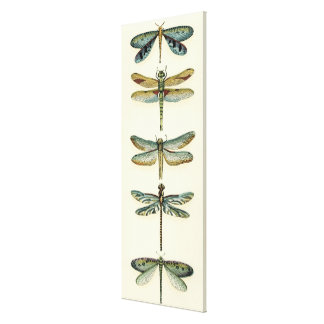 Dragonfly Collection by Chariklia Zarris Canvas Print