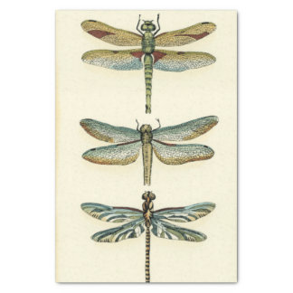 Dragonfly Collection by Chariklia Zarris Tissue Paper