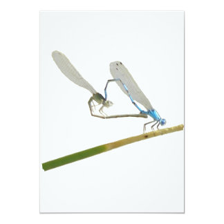 Dragonfly/damselfly in love card