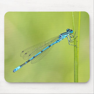 Dragonfly, damselfly mousepad, gift idea