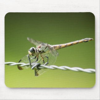 Dragonfly Defies Barbed Wire Mouse Pad
