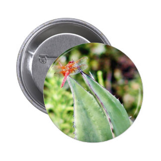Dragonfly Dragonflies Cactuses Buttons