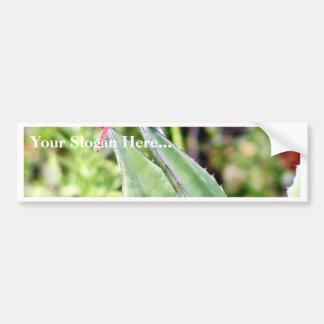 Dragonfly Dragonflies Cactuses Car Bumper Sticker