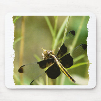 Dragonfly Dragonflies Mouse Pad