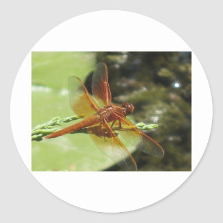 Dragonfly Dreams Classic Round Sticker