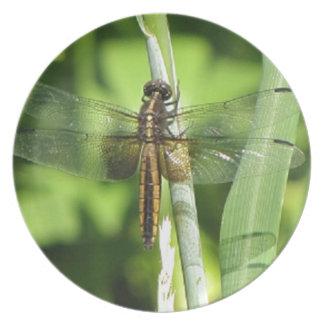 Dragonfly Dreams.jpg Dinner Plate