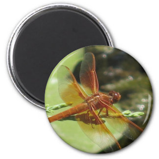 Dragonfly Dreams Magnet
