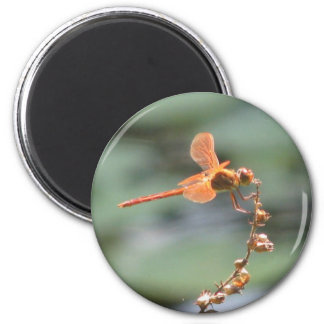 Dragonfly Fire Magnet