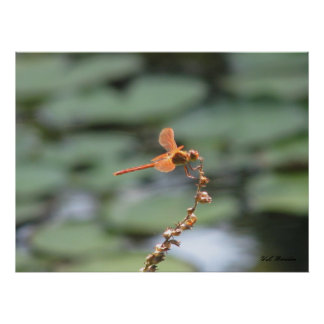 Dragonfly Fire Print