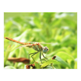 Dragonfly Flyer Design