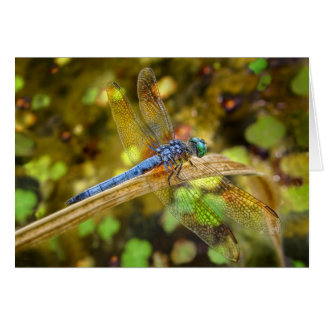 Dragonfly Full Wing Span Card
