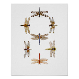 Dragonfly Graphic Art Poster