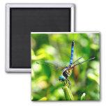 Dragonfly Handstand Magnet
