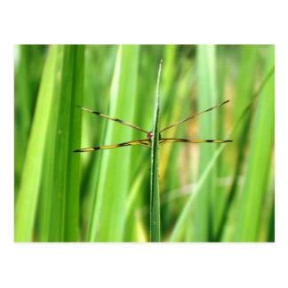 Dragonfly, Head-on Postcard