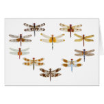 Dragonfly Heart Card