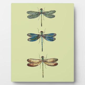 Dragonfly Illustrations Plaque