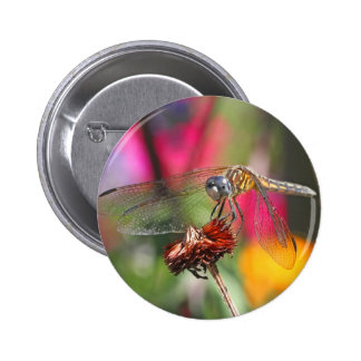 Dragonfly in Colorful Garden Pinback Buttons
