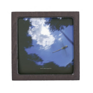 Dragonfly in flight, flapping wings gift box