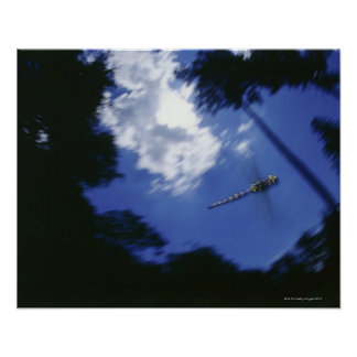 Dragonfly in flight, flapping wings poster