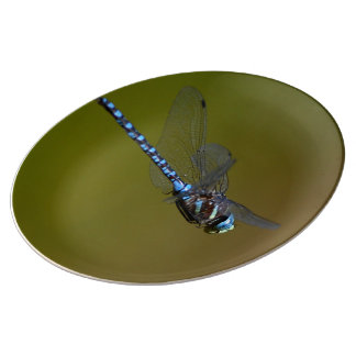 dragonfly in flight porcelain plates