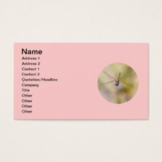 Dragonfly in Flight Photo Business Card