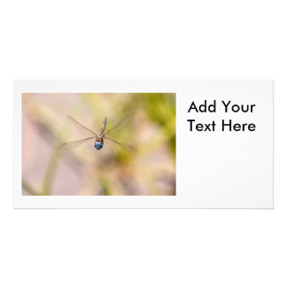 Dragonfly in Flight Photo Picture Card