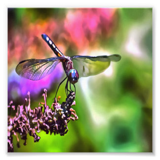 Dragonfly In Green and Blue Photo Print