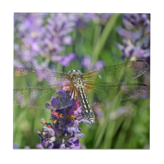 Dragonfly in Lavender Garden Ceramic Tiles