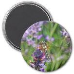 Dragonfly in Lavender Garden Fridge Magnet