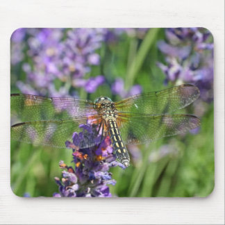 Dragonfly in Lavender Garden Mouse Pad