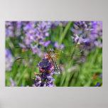 Dragonfly in Lavender Garden Poster