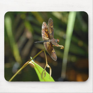 Dragonfly in Rainforest of Borneo Mouse Pad