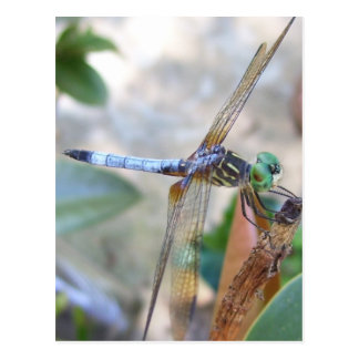 Dragonfly in Spring, Texas Post Card