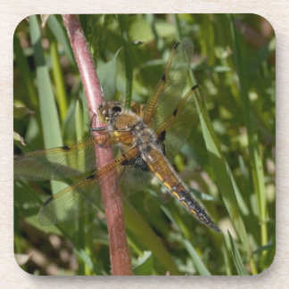 Dragonfly in the Weeds Beverage Coaster