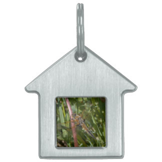 Dragonfly in the Weeds Pet Name Tag