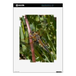Dragonfly in the Weeds Skin For The iPad 2