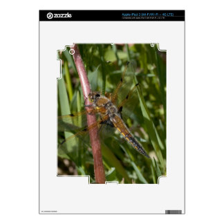 Dragonfly in the Weeds iPad 3 Skin
