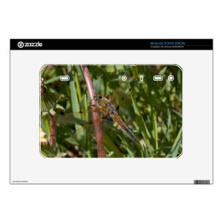 Dragonfly in the Weeds Motorola XOOM Decal