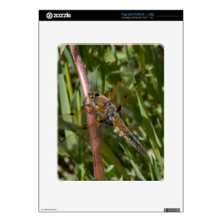 Dragonfly in the Weeds Decal For iPad