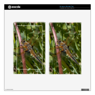 Dragonfly in the Weeds Skin For Kindle Fire