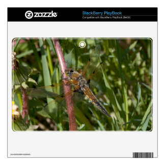 Dragonfly in the Weeds BlackBerry Decals