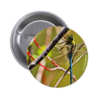 Dragonfly Insect Pinback Buttons